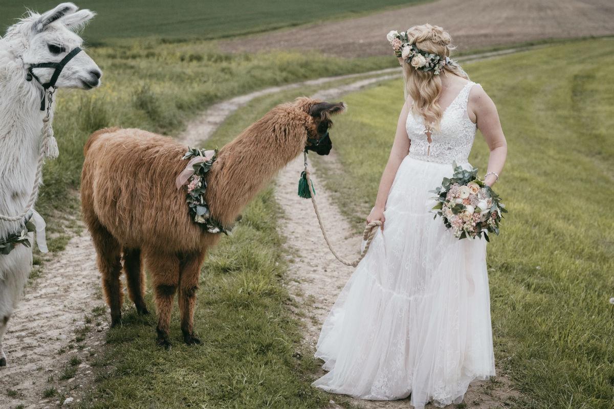 Heiraten Mit Alpakas Isarweiss